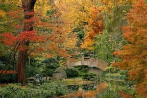 charter-jet-golden-moon-bridge-fort-worth-botanical-garden-pete-vollenweider