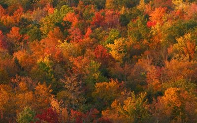 Fly Jet Linx to These Secret Leaf-Peeping Locations