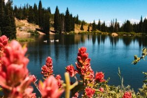 Flowers bloom in front of a mountain lake in Park City, Utah